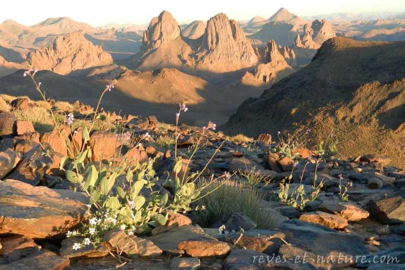 hoggar-désert-fleur-montagne-nous-contacter